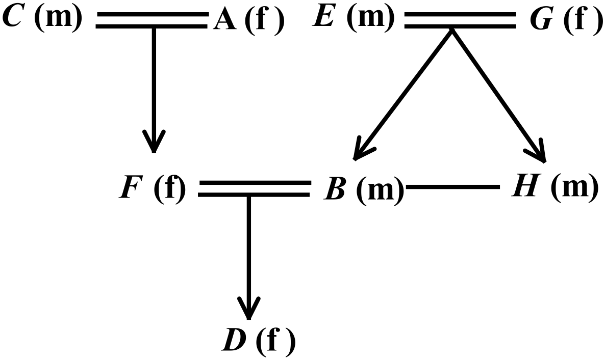 Schematic representation of a family tree